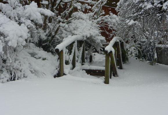 Snowy Garden