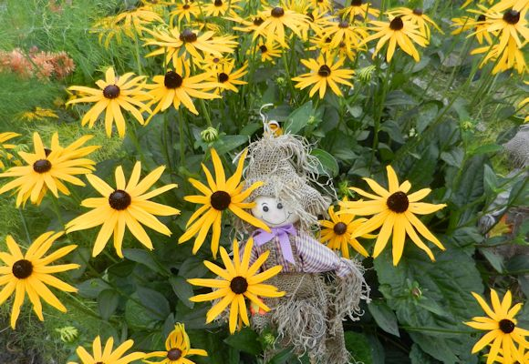 Scarecrow in the Rudbeckias