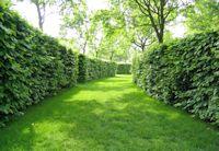 Hedge200